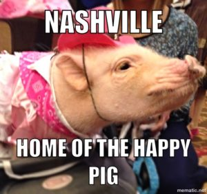 Prissy the mini pig does Nashville