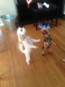Dancing for a treat