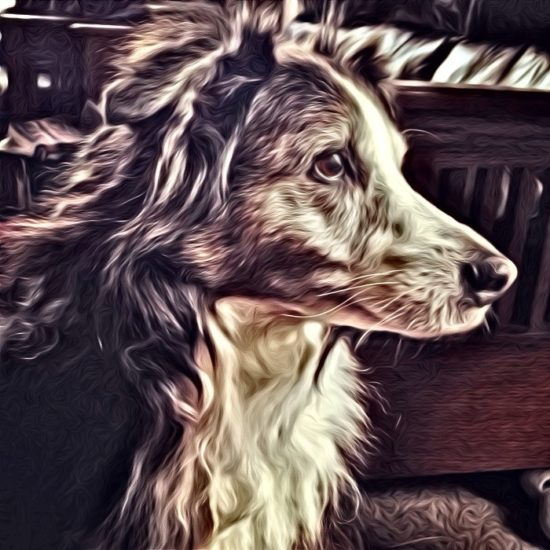 My Aussie thru SuperPhoto app for smart phones
