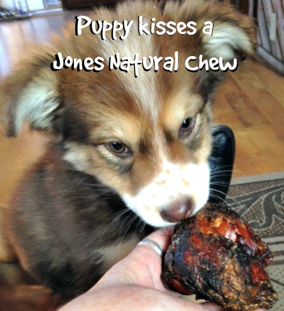 Puppy kisses a Jones Natural Chew