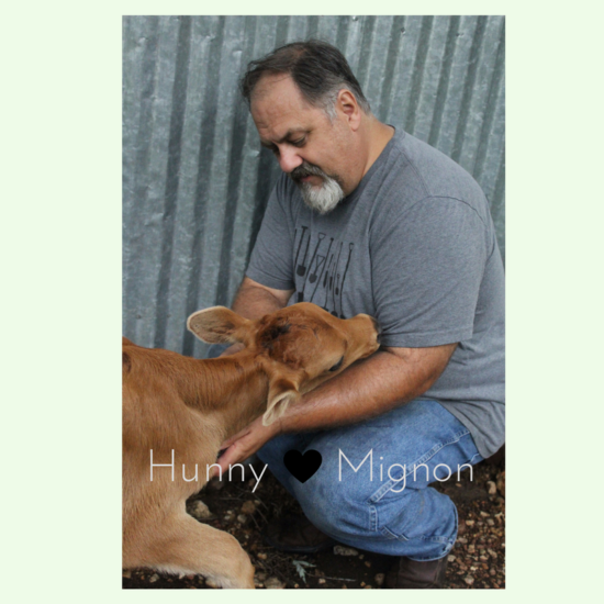Hunny and Mignon, the dairy Calf